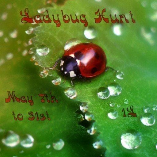 Ladybug Hunt May 2019
